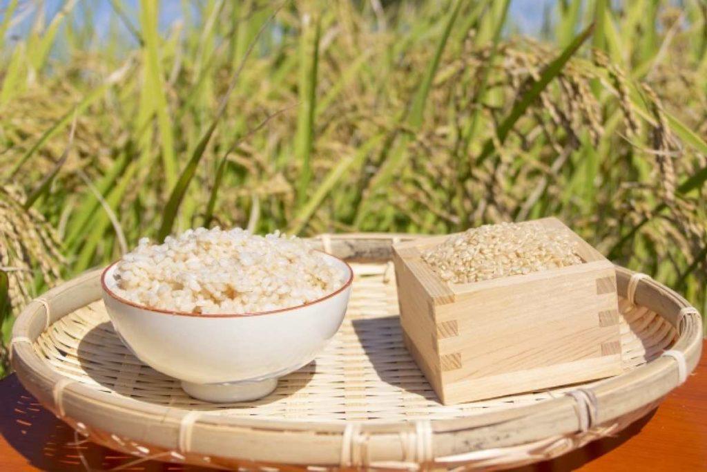 玄米ご飯 おいしい